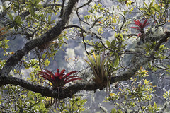 Colombia. (richard.mcmanus.) Tags: colombia rainforest bromeliads trees forest cloudforest southamerica landscape mcmanus