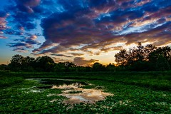 Sunset Timelapse at Alewife Brook Reservation ((Jessica)) Tags: boston clouds colors massachusetts lilypond sky sunset cambridge reflection colorful alewifebrookreservation timelapse video playmemoriestimelapseapp