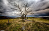 IMG_8751 (radomirmor) Tags: landscape czech grass tree sky stone hdr 6d canon road mbpictures field 163528 flickr p1a1