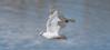 Symbole de paix (Peace symbol) (milvus09) Tags: pigeons columba