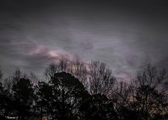 March Dusk (that_damn_duck) Tags: march clouds cloud trees nature