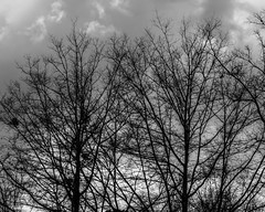 Reality Rejected (that_damn_duck) Tags: nature blackwhite monochrome cloud clouds trees bw blackandwhite