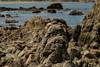 face in the rock (glasnevinz) Tags: newzealand wellington wahinememorialpark palmerbay rocks