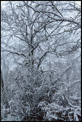 20180319_Sous la Neige_4 (Clapiotte_Astro) Tags: hiver tamron1750mm canon700d tree arbres neige snow vendée treizevents