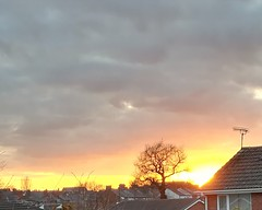 Sunset March 2018 (daveandlyn1) Tags: sun huawei p8lite2017 sunset tree houses rooftops darkclouds