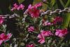 Chained Impatience (Modkuse) Tags: nikon nikonf niikkor nikkor50mm nikkorlens 50mm kodak kodakchrome slidefilm slide transparency impatience flowers flower chain