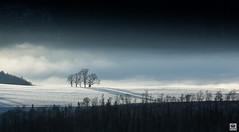 tree group (yves_matiegka) Tags: switzerland landscape fog trees sunrise snow sun rays mist mountains jura naturparkthal