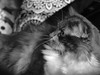 kitty1 (remnantsbrance) Tags: olympus e300 nikon 50135mm 35 indoor window light gimp edited macro dreams