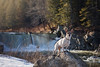4/12 Pokey at the falls (Boered) Tags: pokey waterfall rock snow perkinsville vermont 12monthsfordogs18