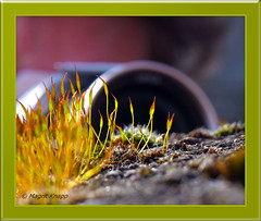 Rico trifft Lumix (magritknapp) Tags: gräser moos erde steine lumix makro grasses moss earth stones herbes mousse terre pierres de gramíneas musgo tierra piedras pedras terra gramas erbe muschio pietre di grassen mos aarde stenen gräs jordstenar græs mosstener mchy traw ziemne kamienie