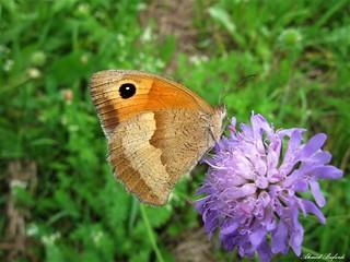 Butterfly 1640