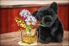 Zenji Dogen (xockisfriends) Tags: zenjidogen blackpanther panther flower aztec zazen god cat animal beautiful cute enlightenment innocent japan love mexico meditation noble portrait xochipilli young jazz spring