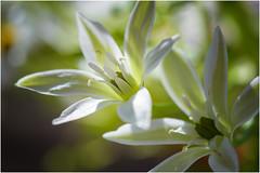 spring in the fields ... (miriam ulivi - OFF /ON) Tags: miriamulivi nikond7200 fiorispontanei wildflowers spring 7dwf