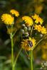 _IGP4174.jpg (Miguel Sanchez Arteche) Tags: insectos fauna