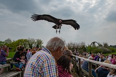 Vulture attack in the UK. (Evoljo) Tags: hawkconservancytrust hampshire andover vulture bird attack fly feathers sky cloud man crowd nikon d500