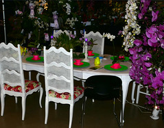 #25 in a series: the 2018 pacific orchid exposition; theme table 2-18 (nolehace) Tags: winter nolehace sanfrancisco fz1000 218 flower bloom plant theme table poe sdos 2018 pacific orchid exposition pacificorchidexpositon goldengatepark 66th annual orchidsinwonderland countyfairbuilding