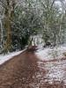 St Marthas on a snowy St Patricks Day-E3170252 (tony.rummery) Tags: em10 guildford mft microfourthirds omd olympus path snow stmarthas surreyhills trees winter albury england unitedkingdom gb