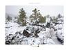 Snow & Pines (www.sicilylandscape.com) Tags: snow pines lavafields lavarocks etna