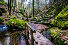 Karlstalschlucht (Dr. Gonzo78) Tags: wald bäume bach steine natur rheinlandpfalz karlstalschlucht blätter moos laub brücke trippstadt deutschland pfälzerwald landschaft