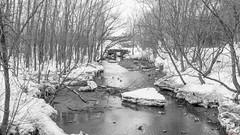 Rivière, Domaine Maizerets, Québec, Canada - 4894 (rivai56) Tags: villedequébec québec canada ca rivière domainemaizerets sony noiretblanc noir blanc white black bw photo et de la du domaine maizerets