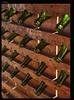 Фанагория (Tutchka) Tags: морекилометров бутылка вино горлышко край краснодарский отпуск пить солнце стекло стенд юг