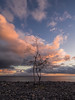 Just the two of us (grbush) Tags: sun sunset tree lonetree shore shoreline beach sea ocean atlantic rocks nature clouds redsky sunrise olympus epm2 lumixg lumixg20f17 panasonic m43 lanzarote playablanca canaryislands
