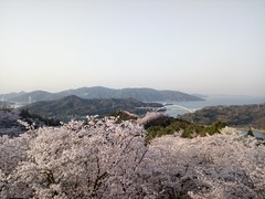 Imabari - Setouchi and sakura (tcchang0825) Tags: sunrise setouchi sea island sakura