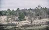 Eifellandschaft zwischen den Jahreszeiten (glasseyes view) Tags: glasseyesview eifel schlangenberg landscape nature naturereserve trees