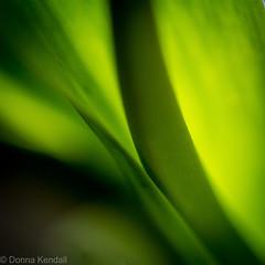 Green (bratli) Tags: green stem leaves tulip abstract macro