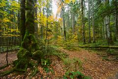 ST851594 (darko djokovic) Tags: serbia westserbia landscape forest srbija tara mountian