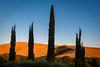 Toskana (Petra Runge) Tags: toskana tuscany toscana landschaft landscape italien italia italy val dorcia cypress zypressen cipresso baum hügel sonnenuntergang sunset tree