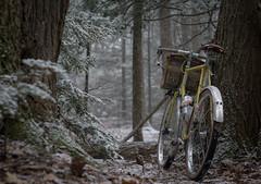 Snowy Woods (koperajoe) Tags: woodland hemlocks 650b cyclotourisme snowyforest romanceur bikeportrait snow helios44m velo