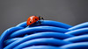 Blue ridge wanderer (James_D_Images) Tags: ladybug blue wicker chair closeup insect curves weave red black macro