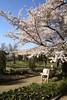 Een mooie lentedag in de Leuvense Kruidtuin (07/04/2018) (Kristel Van Loock) Tags: leuven louvain lovanio lovaina löwen visitleuven atleuven seemyleuven leuveninbeeld drieduizend 3000 leveninleuven kruidtuin kruidtuinleuven botanicalgarden botanischetuin botanischergarten ortobotanico jardinbotanique jardinbotaniquedelouvain jardimbotanico jardinbotanico giardinobotanico hortusbotanicuslovaniensis leuvensekruidtuin loveleuven lente2018 7april2018 07042018 vlaanderen vlaamsbrabant visitflemishbrabant visitflanders visitbelgium flanders fiandre flandre flemishbrabant brabantflamand brabantefiammingo belgium belgique belgien belgië belgica springisintheair springtime spring2018 lentedag