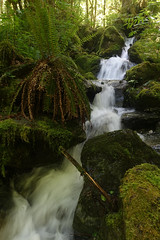 Stream along the Baker Lake trail (Sean Munson) Tags: water creek stream mountbakersnoqualmienationalforest mtbakersnoqualmienationalforest nationalforest washington hiking fern ferns
