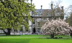 Dublin's Fair City: Trinity College (Peter Denton) Tags: dublin ireland europe trinitycollege magnolia university campus ©peterdenton canoneos100d education architecture tranquil tranquillity baileáthacliath capitalcity academia eire