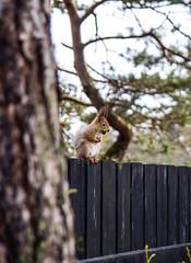 Resting Squirrel (JPP97) Tags: squirrel sitting resting orav