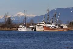 Old Boys (Clayton Perry Photoworks) Tags: vancouver bc canada winter explorebc explorecanada ladner boat