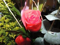 Rosa roja (epugaa) Tags: flor flower naturaleza nature colorful colorido