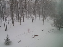 And It's Still Falling... (splattergraphics) Tags: snow scenery weather noreaster owingsmillsmd