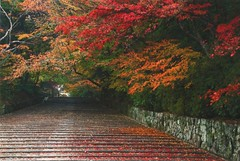 Kyoto_Japan (Kogotok7) Tags: autumn foliage
