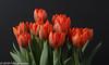 "On our diningtable ""Tulip Princess Irene"" (Fred / Canon 70D) Tags: tulipprincessirene tulp tulpen tulips jinbeidiffusionjumboumbrella jinbei falconeyesoctabox falconeyes falconeyesskk2150d ef100mmf28lmacroisusm canon70d canoneos canon eefde closeup flowers spring spring2018 orange orangetulipprincessirene"