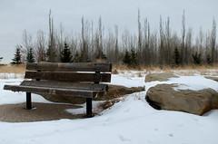 Nose Creek Winter Scene (Bracus Triticum) Tags: nose creek winter scene bench calgary カルガリー アルバータ州 alberta canada カナダ 11月 十一月 霜月 jūichigatsu shimotsuki frostmonth autumn fall 平成29年 2017 november