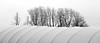 nature on plastic (.martinjakab) Tags: acrosye monochrome blackandwhite schwarzweiss trees white structure contrast panoramic