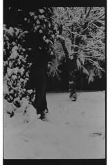 P59-2018-023 (lianefinch) Tags: argentique argentic analogique analog blackandwhite blackwhite bw noirblanc noiretblanc nb monochrome neige snow arbre tree jardin garden outdoor extérieur