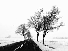 On the way to the Easter weekend (ANBerlin) Tags: natur nature schneeflocken snowflakes country ländlich rural landstrase countryroad bäume trees drausen outdoor snow schnee weg way strase road infrastruktur infrastructure struktur structure abstrakt abstract ausergewöhnlich extraordinary einfarbig monochrome biancaenero noiretblanc schwarzweis blackwhite sw bw deutschland germany meckpomm mecklenburgwesternpomerania mecklenburgvorpommern gribow züssow gützkow b111 anb030 shotoniphone iphotography iphonography 8plus iphone8 iphone apple