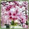 Irresistible. #Takoma #dc #dclife #washingtondc #iphone #iPhonemacro #macro  #flower #flowersofinstagram (Kindle Girl) Tags: iphone takoma dc dclife washingtondc iphonemacro macro flower flowersofinstagram
