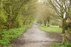 20180409 (Homemade) Tags: green spring path sonydscrx100 trees didcot oxfordshire walkers dogwalker dog person
