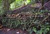 Trunyan Village Graveyard, Bali 8 (Petter Thorden) Tags: bali indonesia kintamani lake gunung batur trunyan