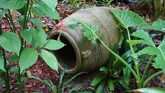 Wandering around an Open Garden, a pot in the bushes. (spelio) Tags: